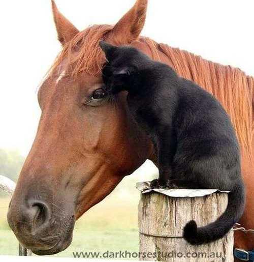 Harmonymals : site internetcomportementaliste pour tous les animaux de compagnie / Educateur canin 34f7011f64da1566b63053bb6a0beb12