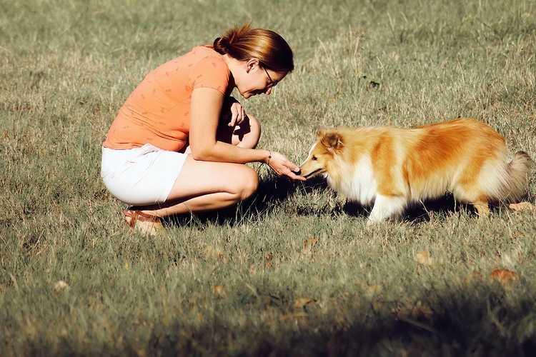 Harmonymals : site internetcomportementaliste pour tous les animaux de compagnie / Educateur canin 0