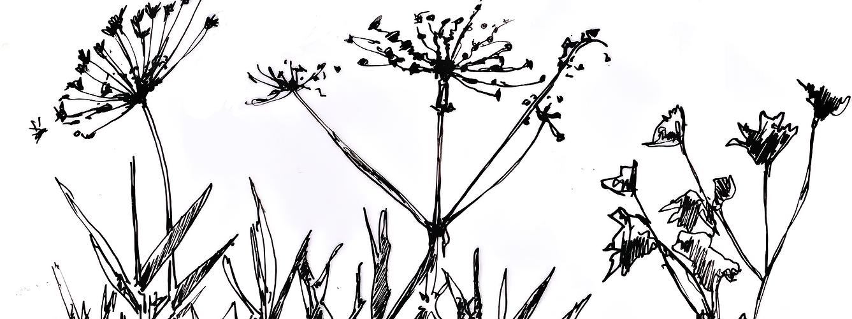 Hortus Digitus : Concepteur de jardins psfleurs