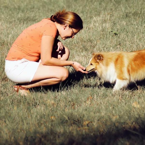 Harmonymals : site internetcomportementaliste pour tous les animaux de compagnie / Educateur canin